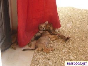 Malia Stray Puppies