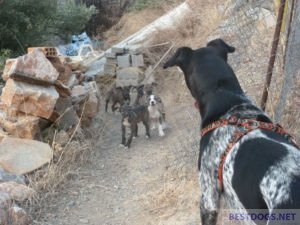 numerous puppies.