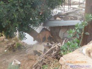Dog at Agios Haralampos hill (Agios Nikolaos)