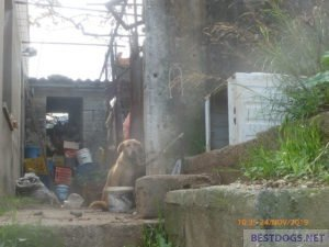 Dog three years tied (Neapoli)