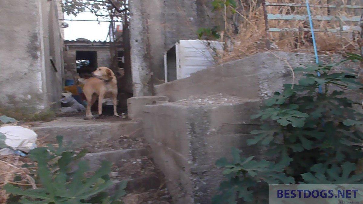Animal Abuse Neapoli
