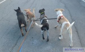 A pack full of dogs