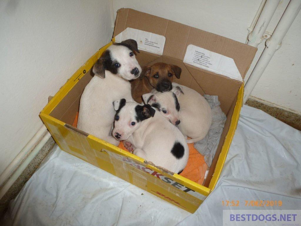 Santa Claus puppies of Neapoli
