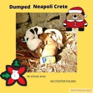 Santa Claus puppies from Neapoli