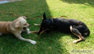 dogs best friendship