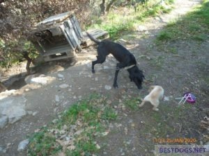 Dogs in the mountains above Neapoli