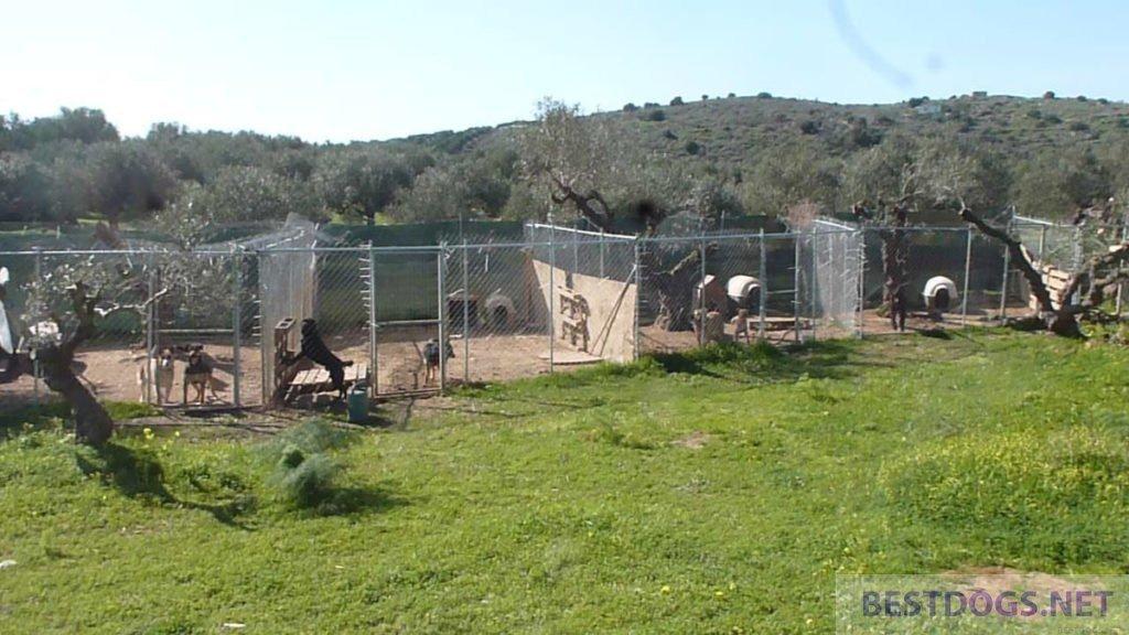 Bronx Familia Animal Shelter