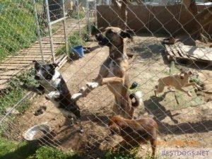 Happy dogs at Nikos Bronx Familia Shelter