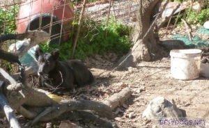 Chain Dogs in the Corona Crisis