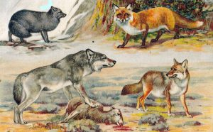 Canidae family